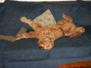 sleeping upsidedown
