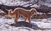 Gracie's Visit To Local Mountains In Search of Snow