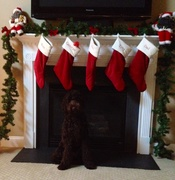 Merry Christmas & Happy New Year from Dougie!!