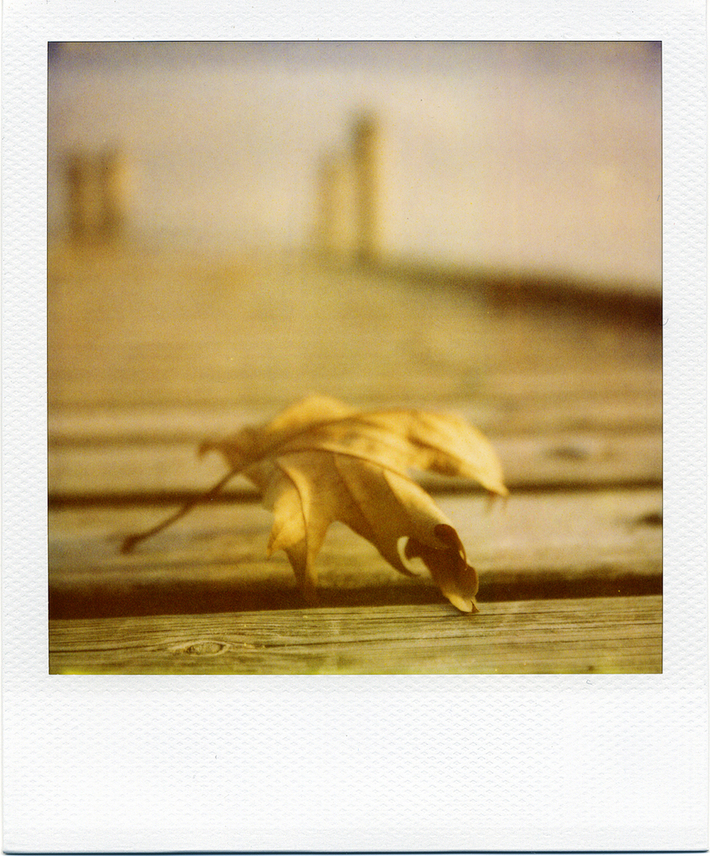 la leggerezza effimera dell'autunno