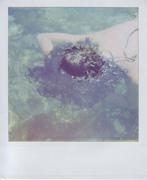 il sogno della medusa blu