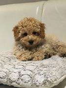 Lulu at 15 Weeks