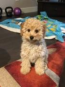 Lulu at 14 Weeks