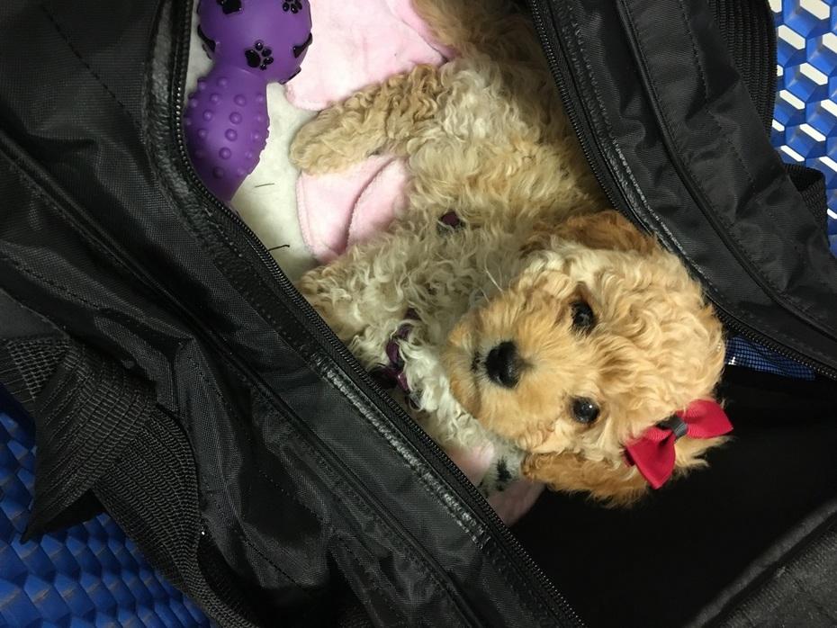 Lulu at 9 Weeks