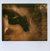 Occhi Animali - Astrazione#2