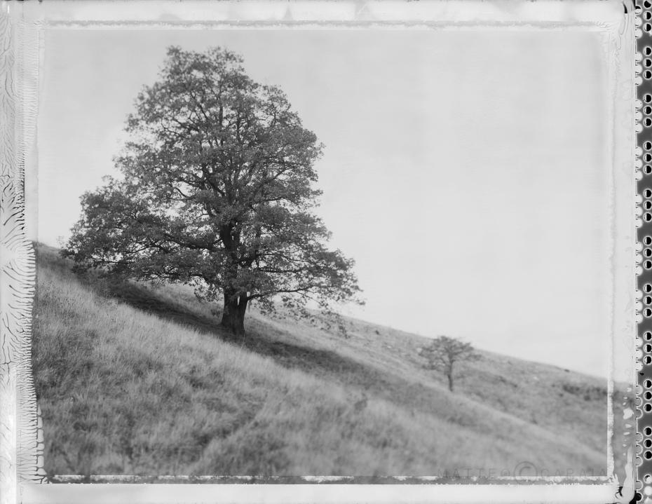 Me and the trees #2 -Credo che non vedrò mai una poesia bella come un albero. Ma le poesie le fanno gli sciocchi come me. Un albero lo può fare solamente Dio. Joyce Kilmer