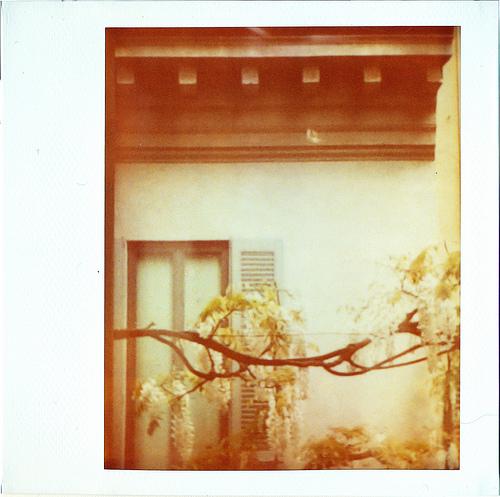 Alessandro Manzoni - Backyard