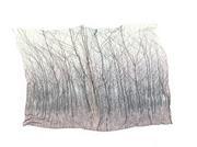 nel bosco di betulle