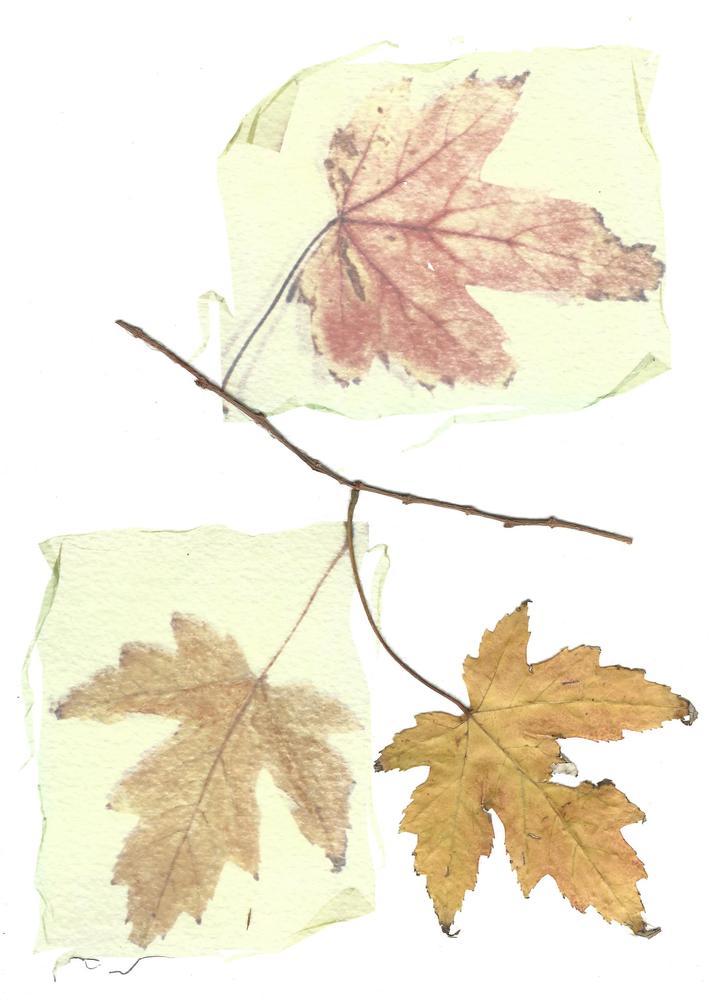 Per dare lavoro al vento, cuciva a filo doppio le foglie secche dell'albero.Antonio Machado