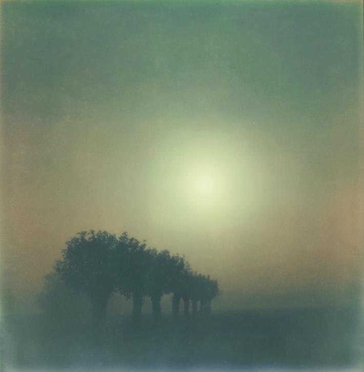 Fog impression and Sunlight