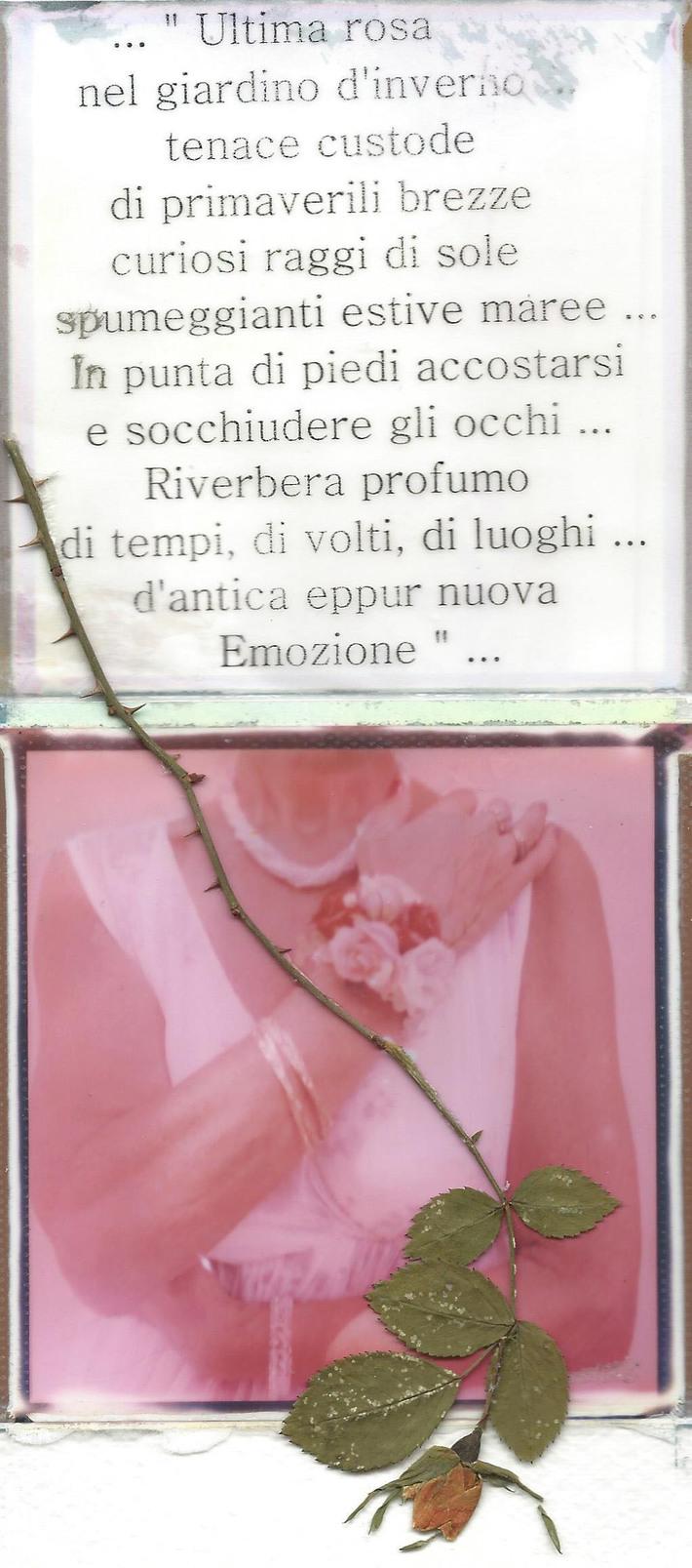 ... ultima rosa di Therry