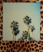 Palme leopardate