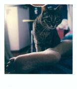 facéties de chat