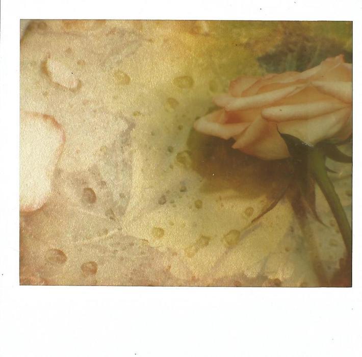 .... In un momento - Sono sfiorite le rose - I petali caduti - Perché io non potevo dimenticare le rose  ..... Dino Campana