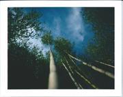 Cloud 'n trees