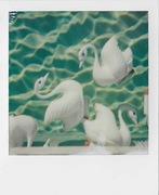 docks & ducks