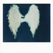 La perdita delle ali