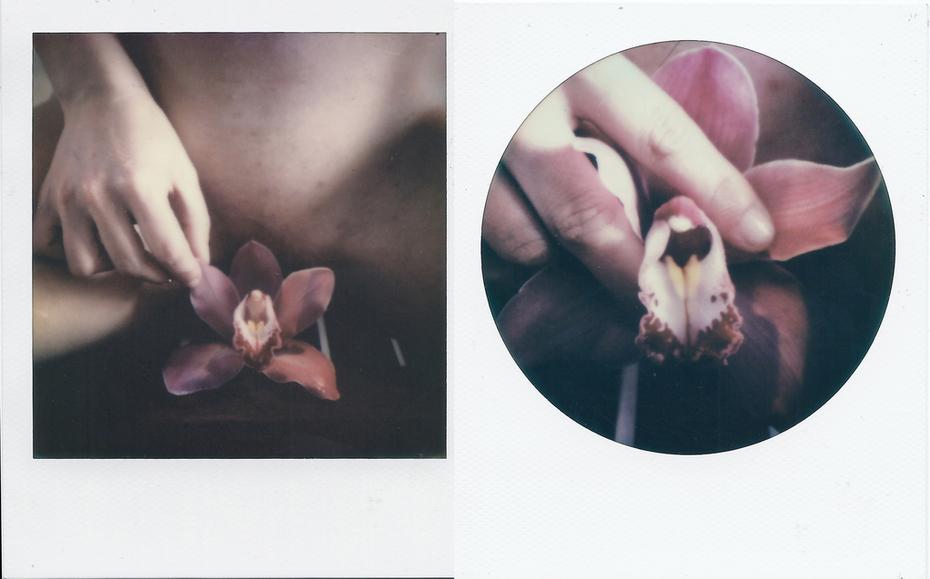 Orchidaceae - 19 days to die