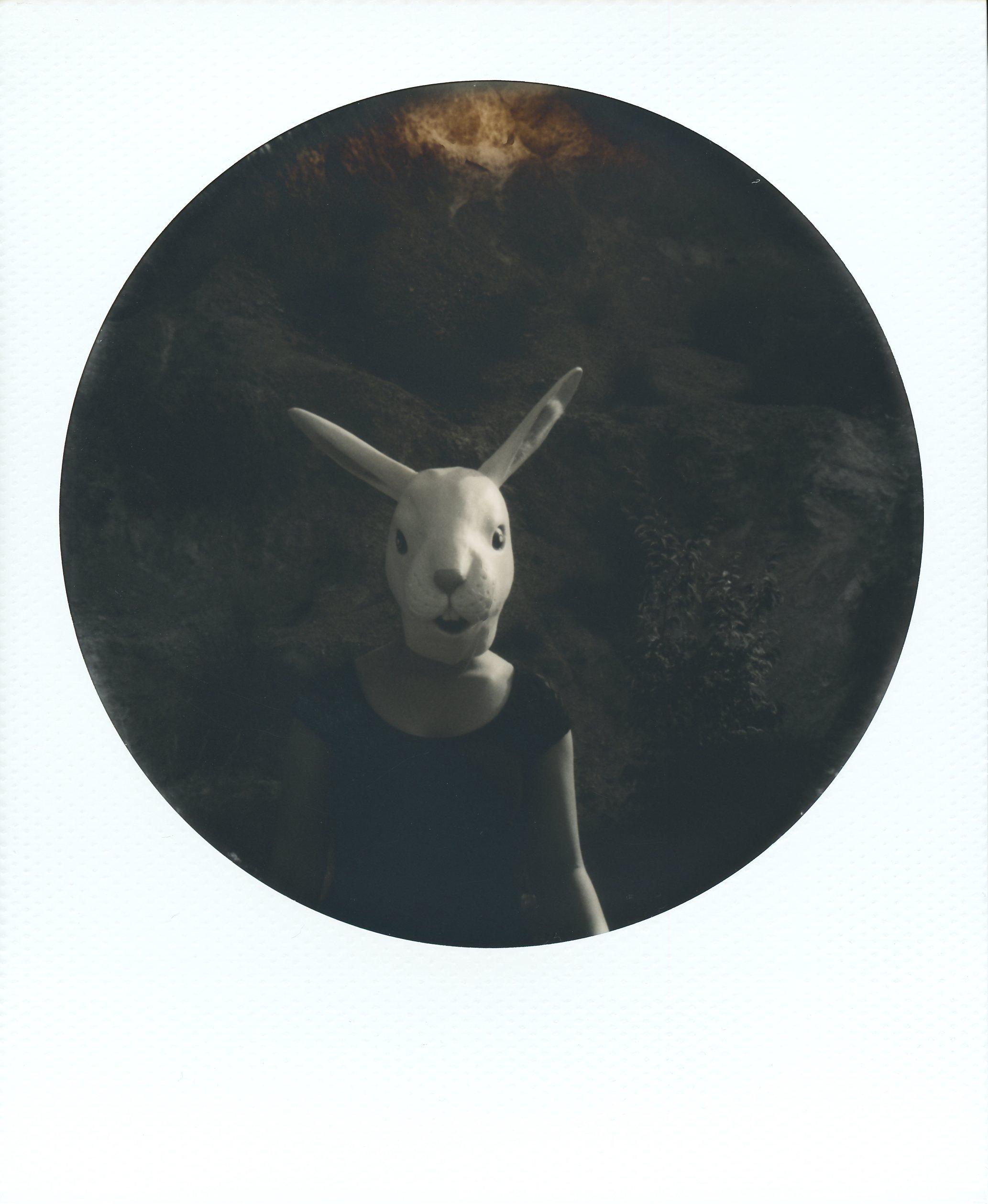 Rubber-Rabbit