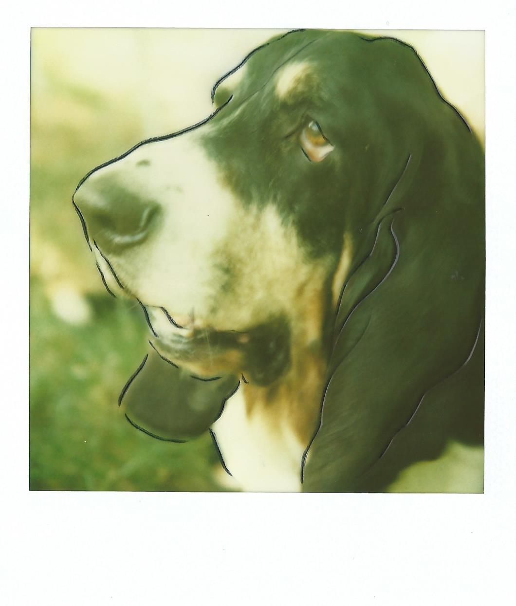 La riconoscenza è una malattia del cane non trasmissibile all'uomo. Antoine Bernheim