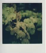 orchidee04