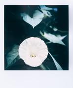 Flowers #06