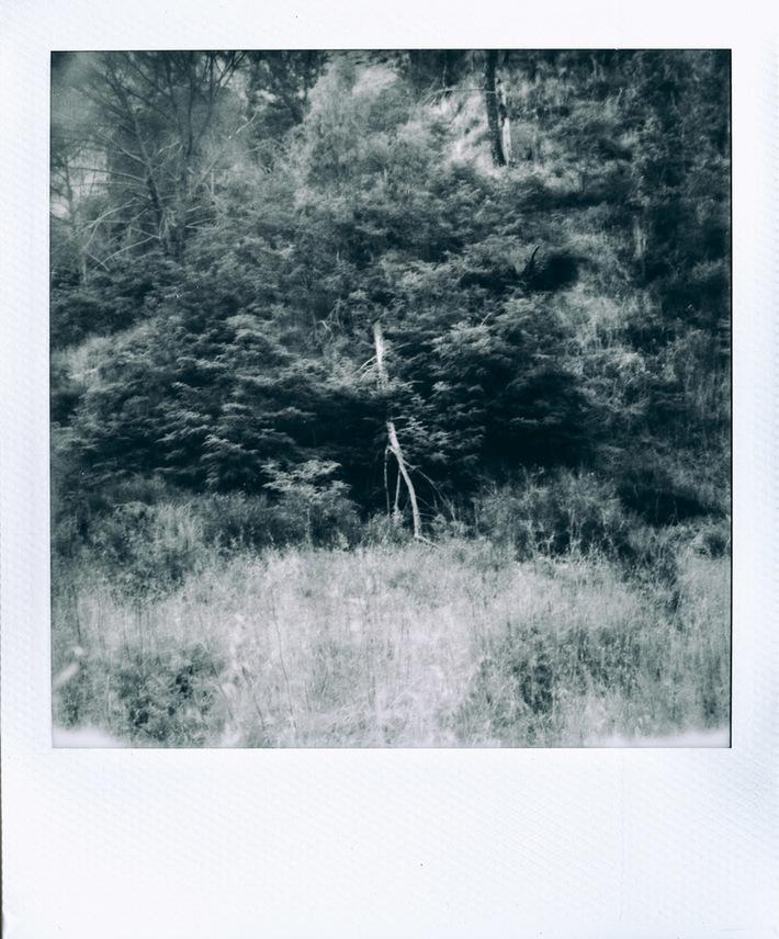 Tree #01