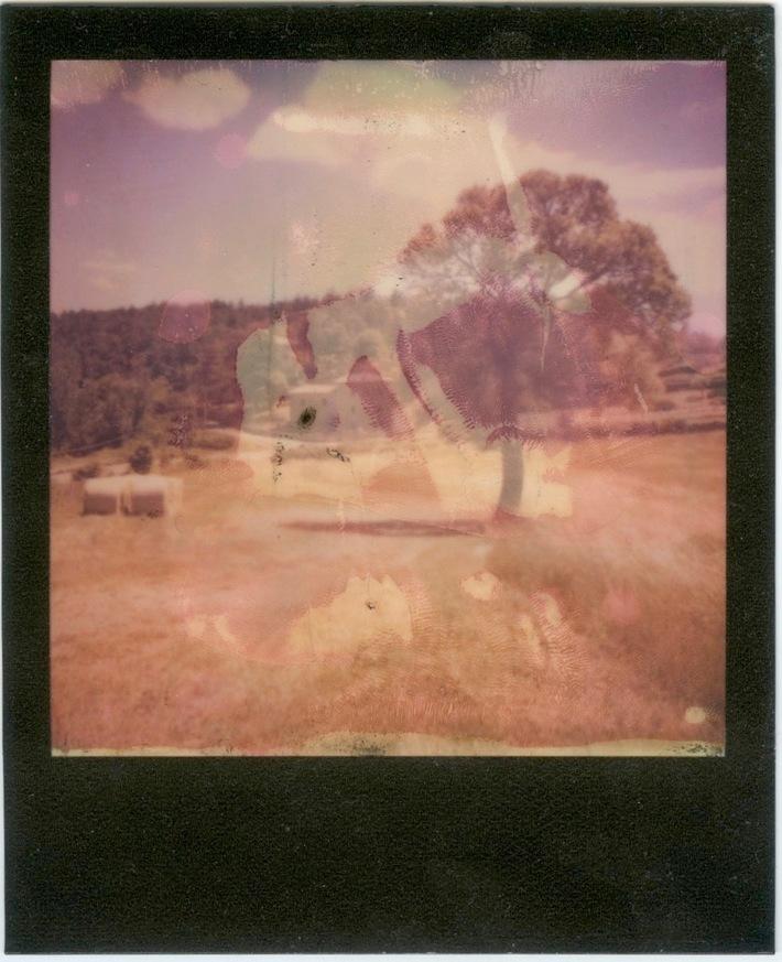 campo di grano '17