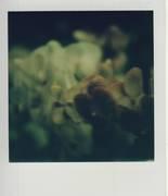 orchidee03
