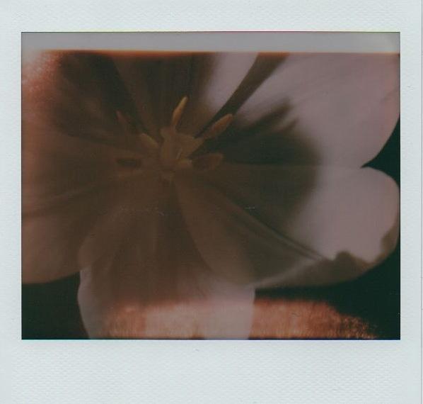 Hand developed film