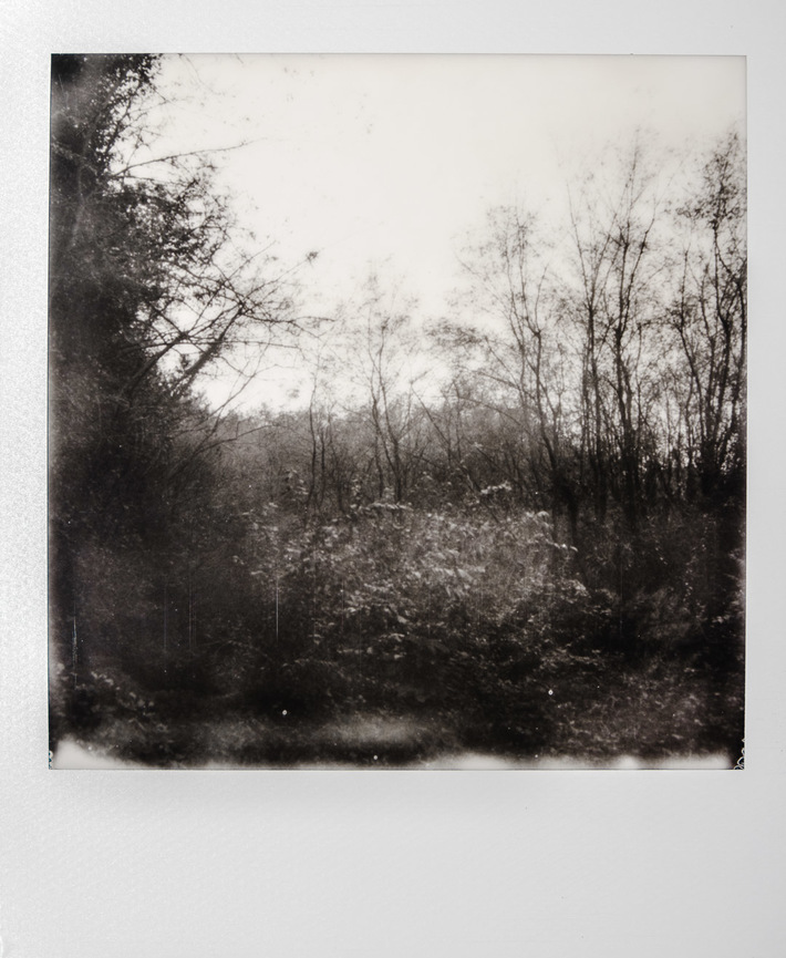 Urban forest #02