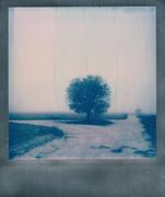 Ricomincio a fotografare gli alberi