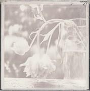 Io devo forse ai fiori l'essere diventato pittore. Claude Monet