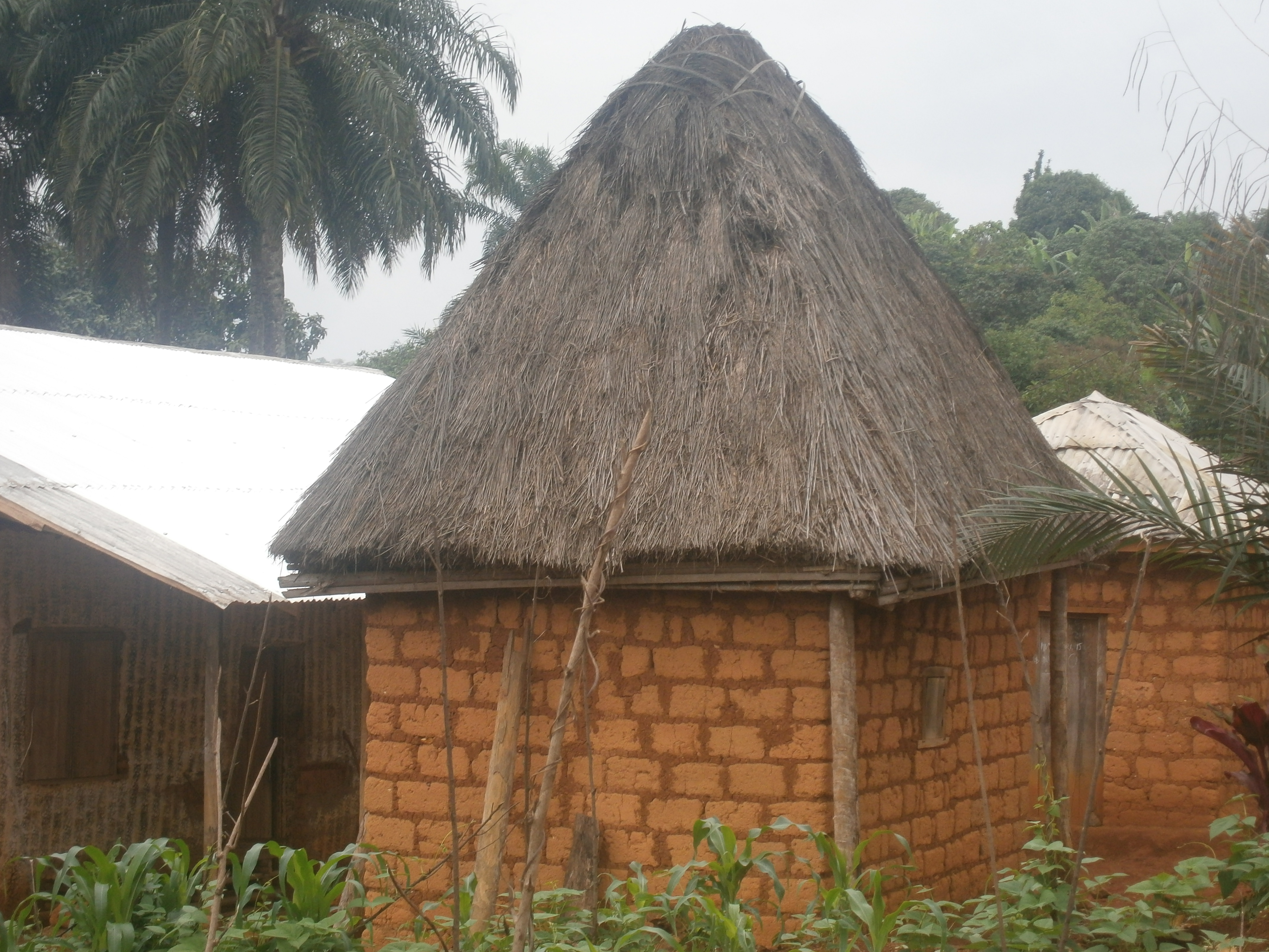 CAPTURING NUTRIENT RICH WATER FROM THE THATCHED ROOFS