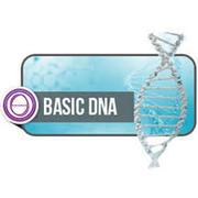 Stage ThetaHealing ADN Base