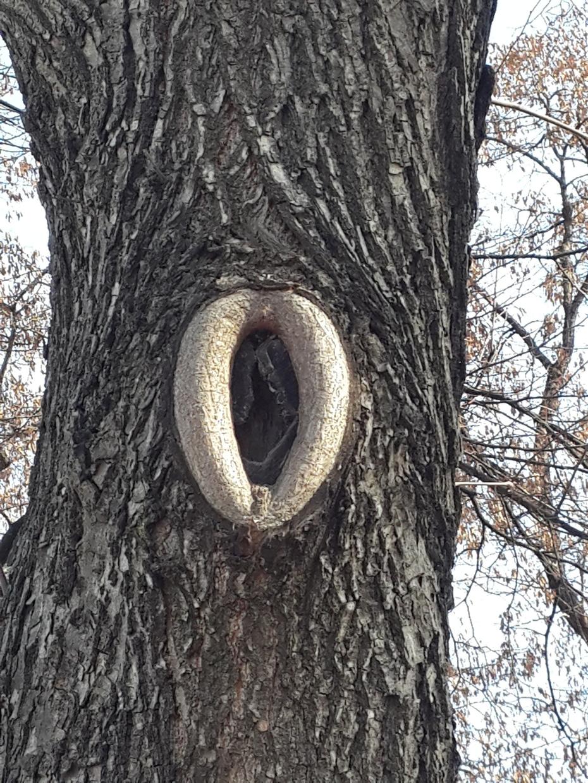 Дерево в Парке Горького.