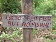 ok to feed fish