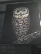 My owl painting .