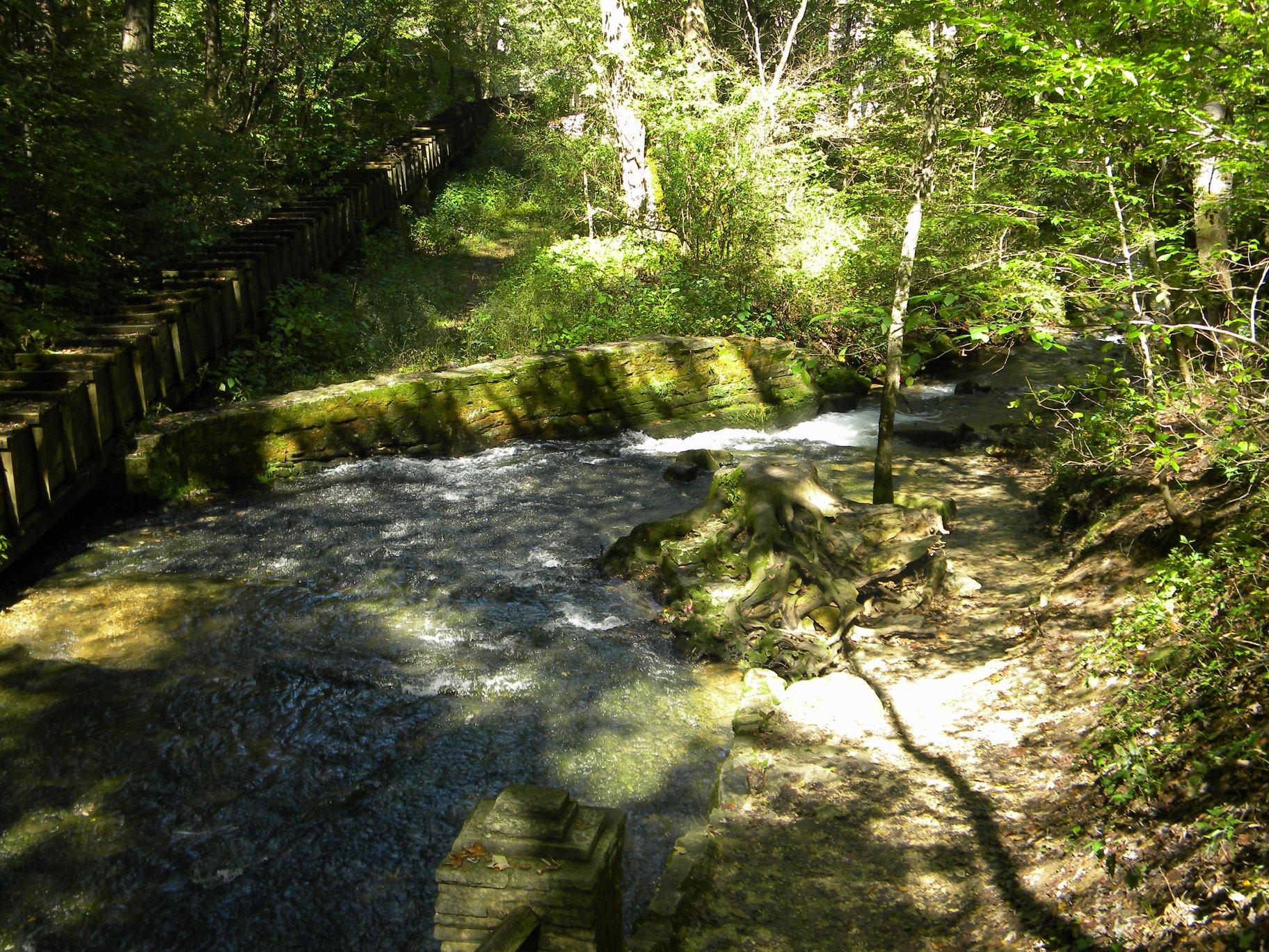 My Woodland Adventures