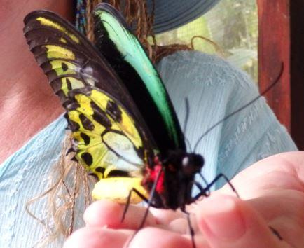Oh gentle butterfly