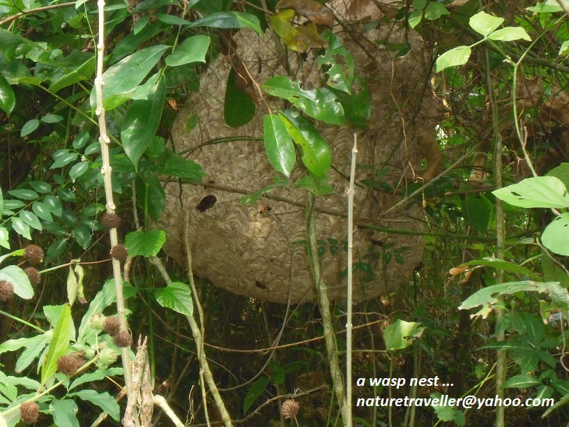 a wasp nest ... (25)