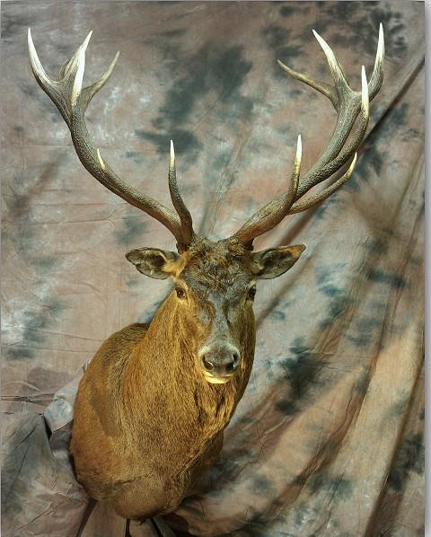 Chasse 2018 avec St. Hubertus Hunting Tours n. 1