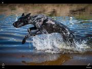 Halya dans l'eau