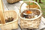 AR LIVRE: Em busca dos cogumelos da Faia Brava