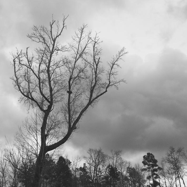 Darkly delightful day in my neighborhood (Jan. 2016)