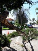 Fw: Tree branch falls
