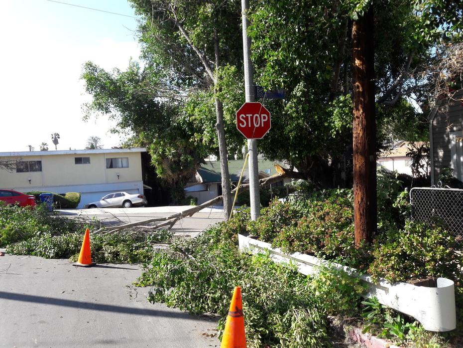Fw: More pics of broken branch