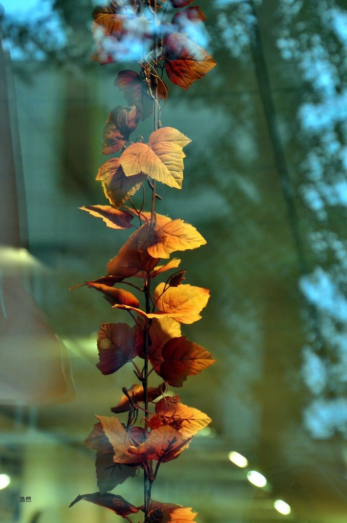 Fairyland autumn