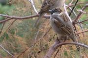 Desert Birds