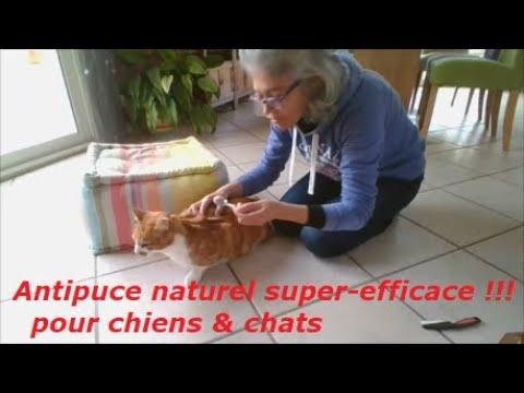 Antipuce naturel super-efficace chiens & chats !